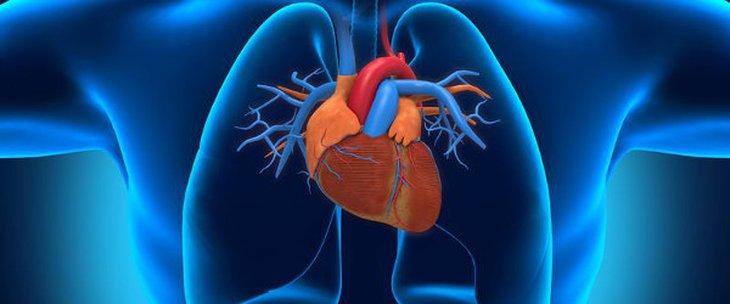 Комплекс Сердце и сосуды